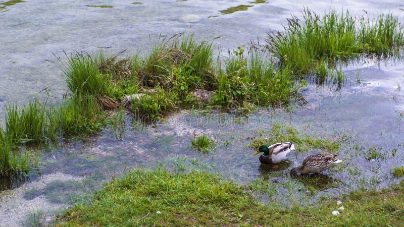 Beau lac Bohinj photographie stock