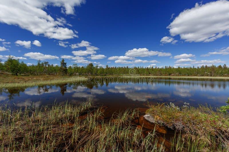 Beau lac calme avec des usines dans le premier plan et une forêt conifére dans la distance photo stock