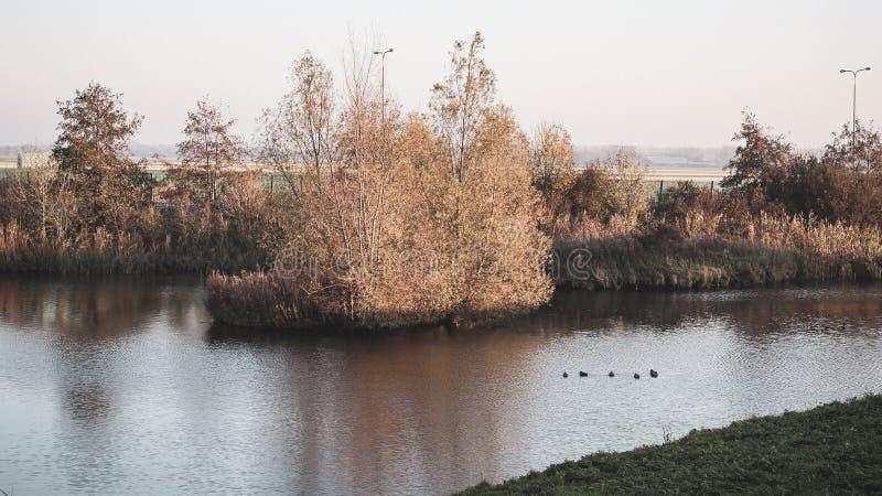 Beau lac dans la banlieue d'Alkmaar, Pays-Bas! images libres de droits