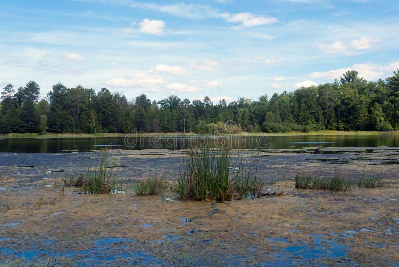 Beau lac de forêt, le Wisconsin, Etats-Unis image libre de droits