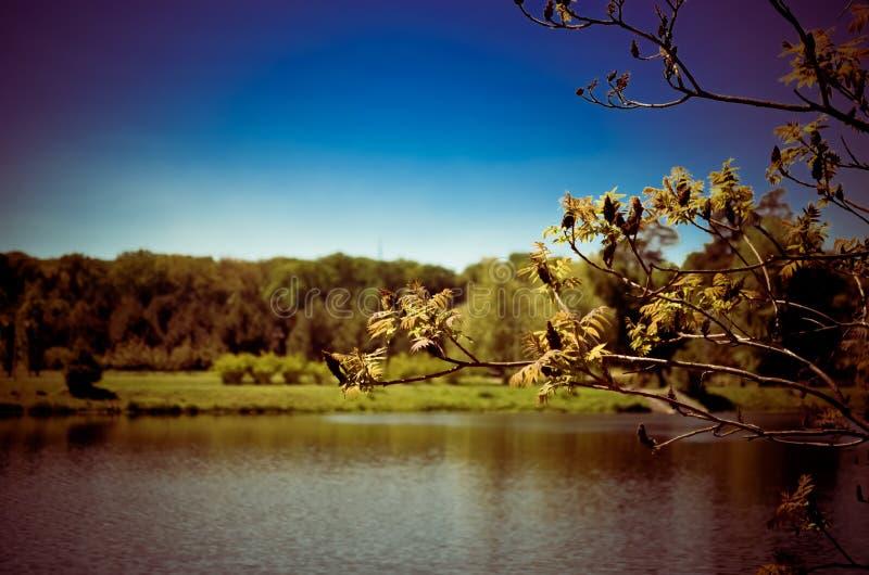 Beau lac en stationnement photographie stock