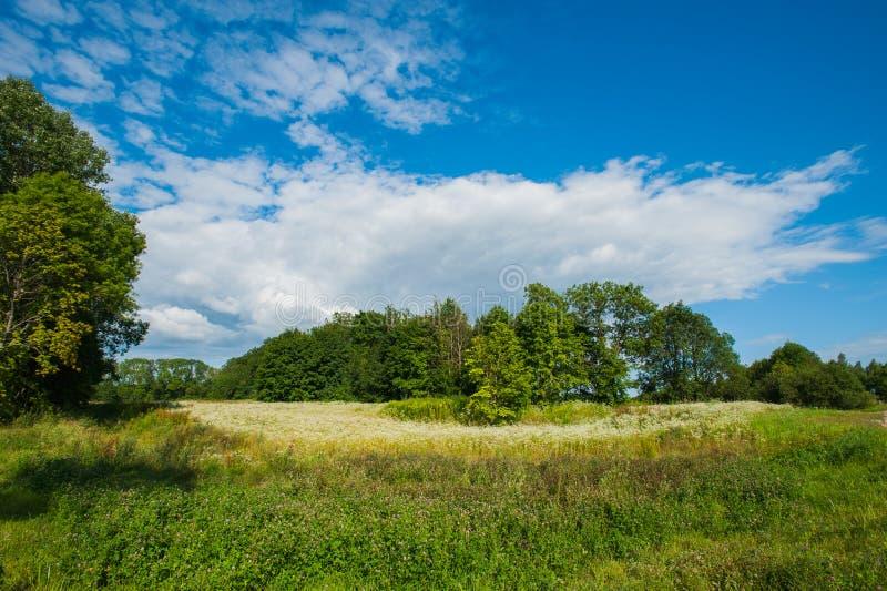 Beau lac immobile avec des arbres sur l'horizon et les nuages gonfl?s blancs dans le ciel Jour d'?t? paisible au cottage Grand ve images libres de droits