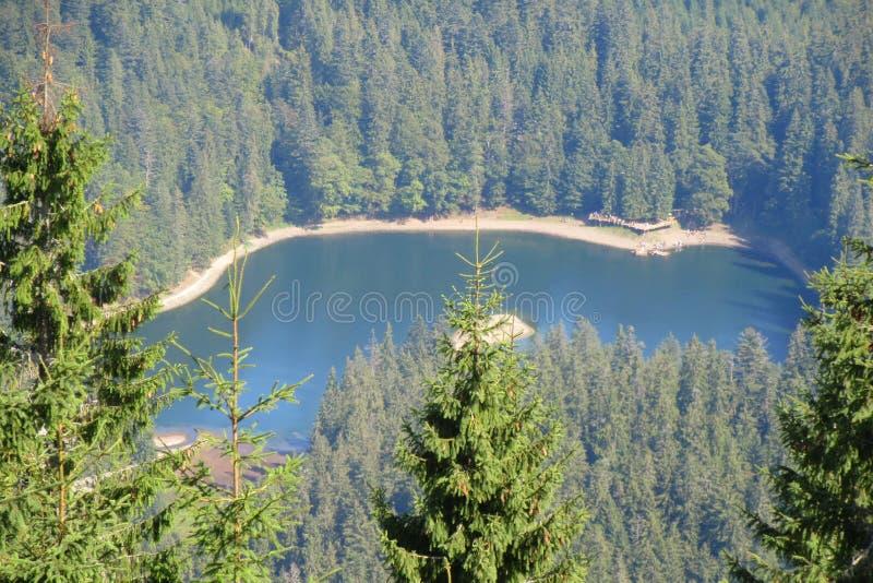 Beau lac Synevyr entouré avec la forêt image libre de droits