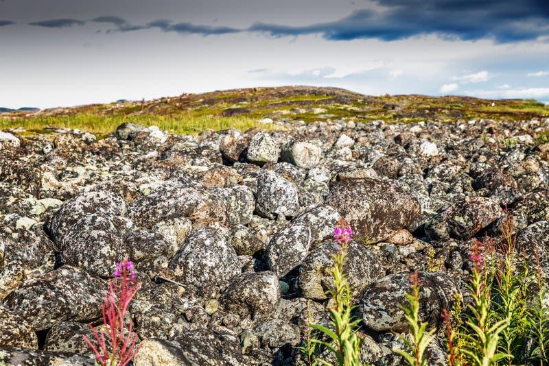 Beau landskape de montagne, pierres, fleurs, ciel bleu photos stock