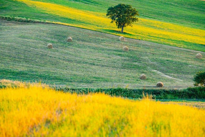 Beau lanscape de la Toscane accidentée photographie stock
