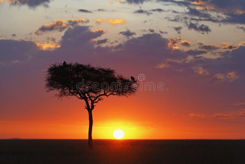 Beau lever de soleil photo libre de droits