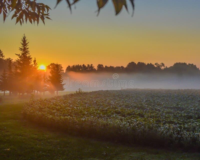 Beau lever de soleil avec des rayons en brouillard au-dessus de gisement de soja photographie stock