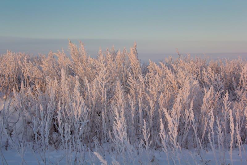 Beau lever de soleil dans les environs de Dnipro image stock