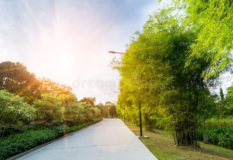Beau lever de soleil en parc avec la voie photo libre de droits