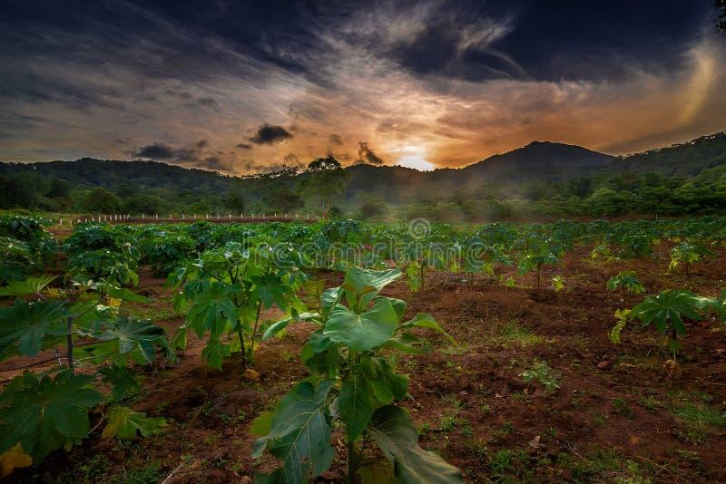 Beau lever de soleil de matin avec les plantes vertes Coïmbatore Tamilnadu images libres de droits
