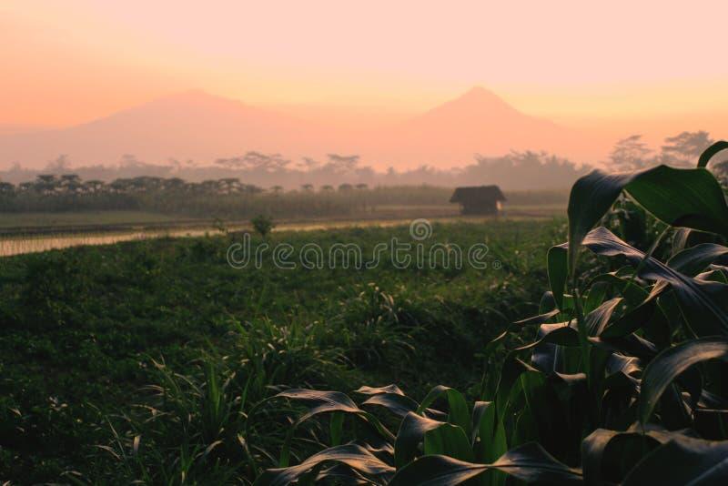 Beau lever de soleil de matin dans la campagne photographie stock
