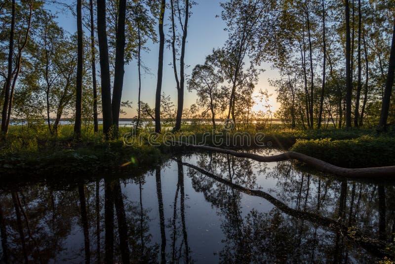 Beau lever de soleil sur l'étang avec la réflexion du ciel près du lac photos libres de droits