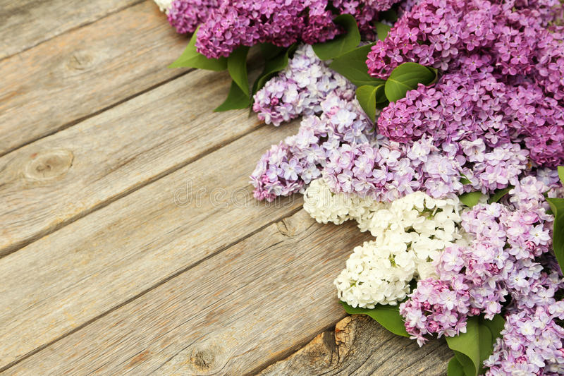 Beau lilas photographie stock libre de droits