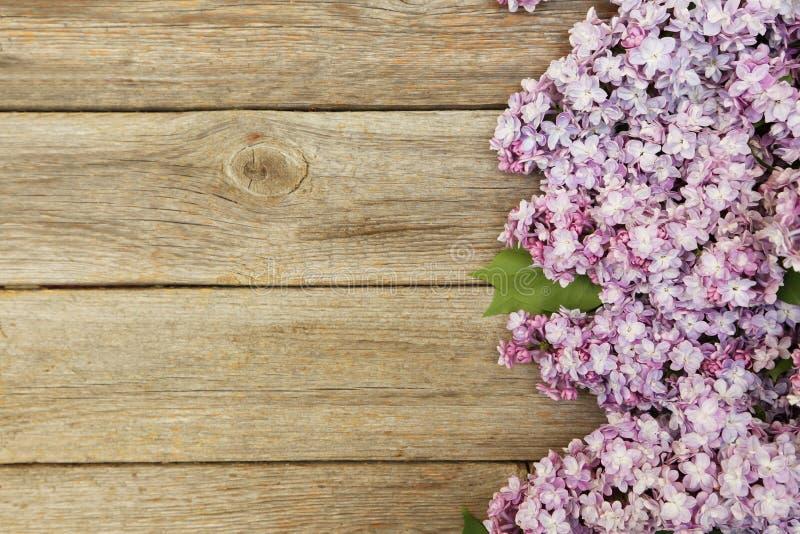 Beau lilas photo libre de droits