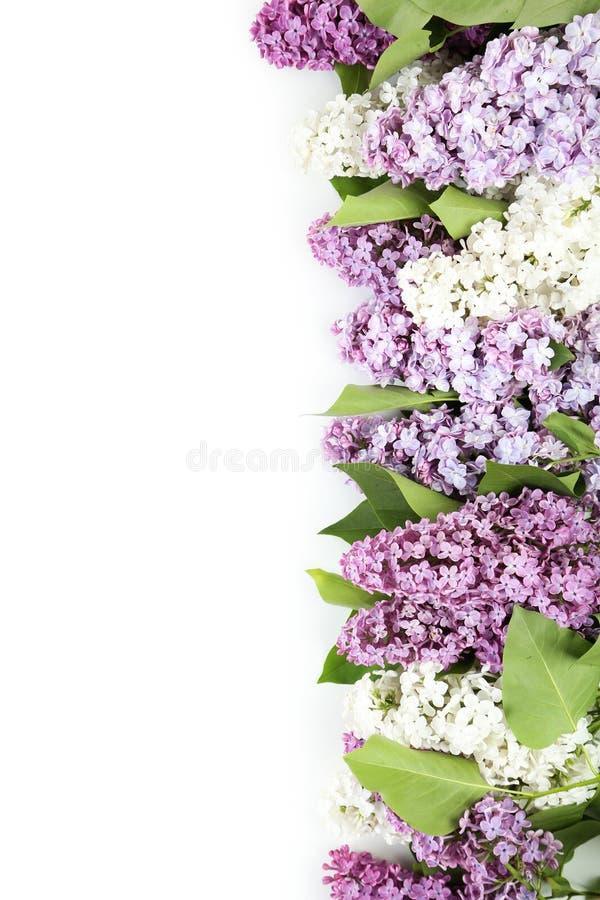 Beau lilas photographie stock
