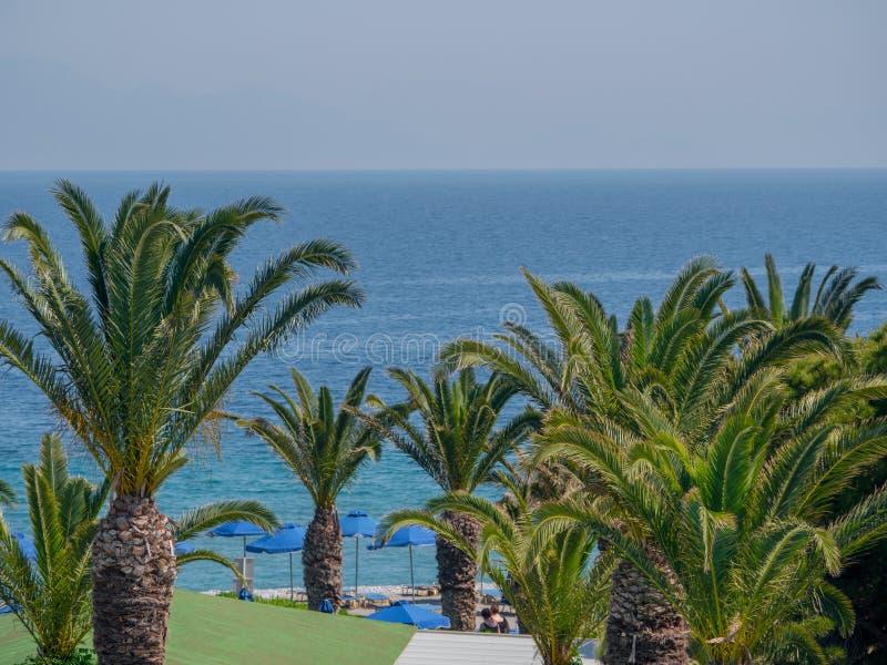 Beau littoral tropical avec de l'eau les palmiers et bleu clair photo libre de droits