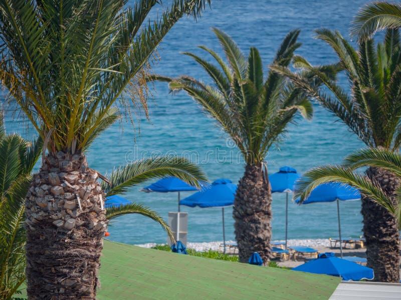Beau littoral tropical avec de l'eau les palmiers et bleu clair image libre de droits