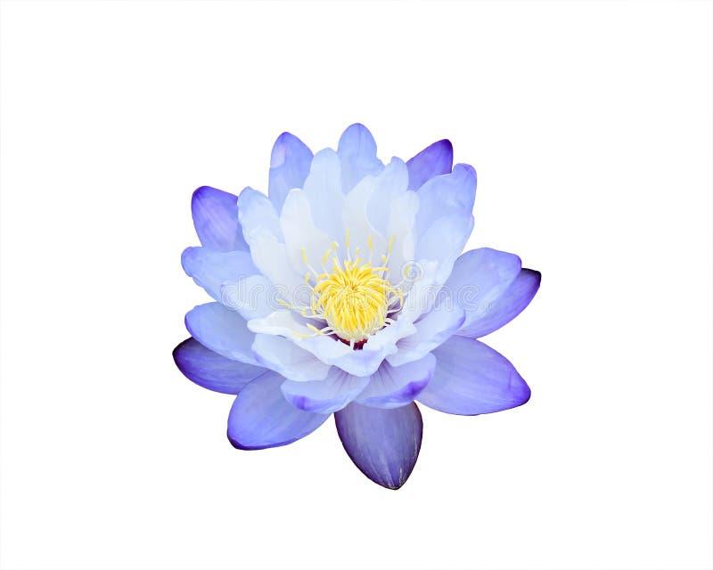 Beau lotus images libres de droits
