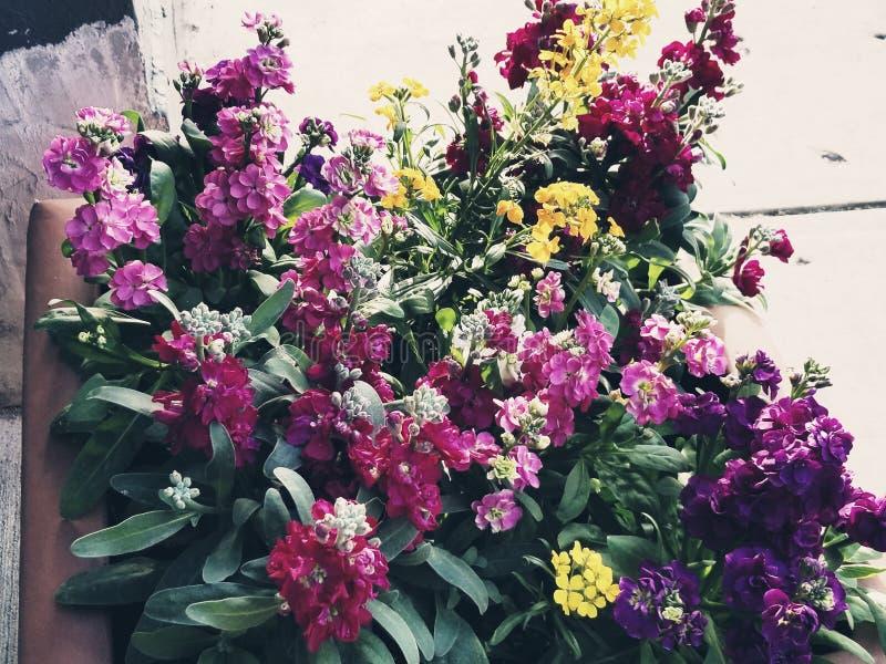 Beau mélange des fleurs photo stock