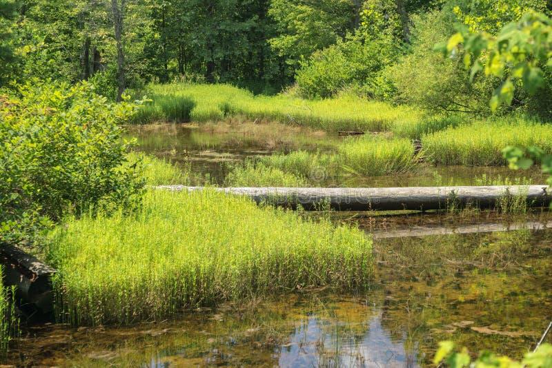 Beau marais boisé dans le comté de Craig, Virginie, États-Unis image stock