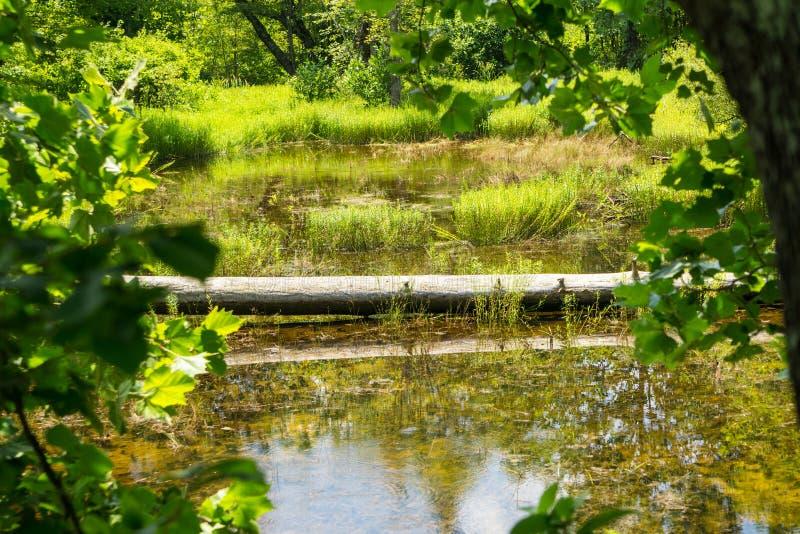 Beau marais boisé dans le comté de Craig, Virginie, États-Unis photographie stock