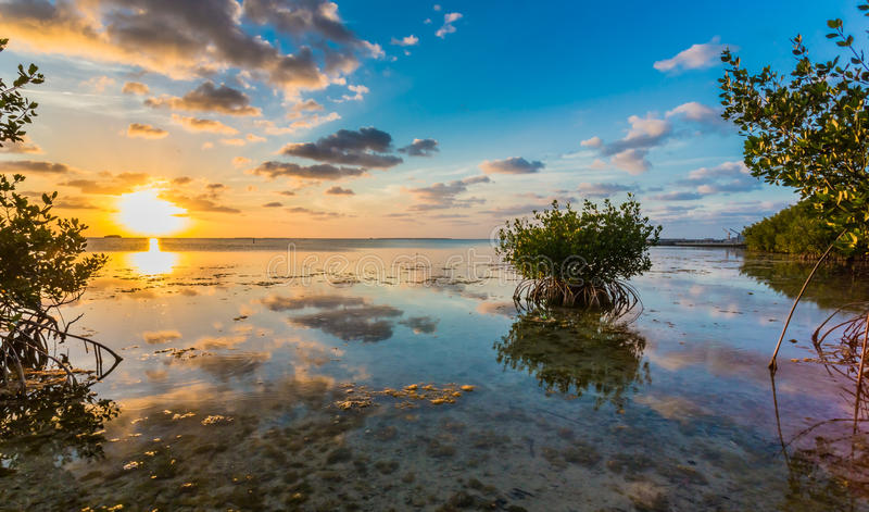 Beau marais de palétuvier au coucher du soleil dans des clés de la Floride images libres de droits
