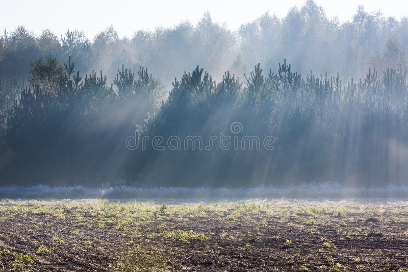 Beau matin avec des rayons de soleil et le paysage automnal de jeune forêt photographie stock