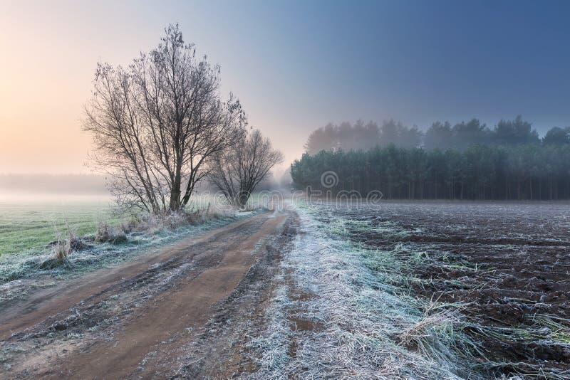 Beau matin avec le gel sur des usines Horizontal automnal photographie stock libre de droits