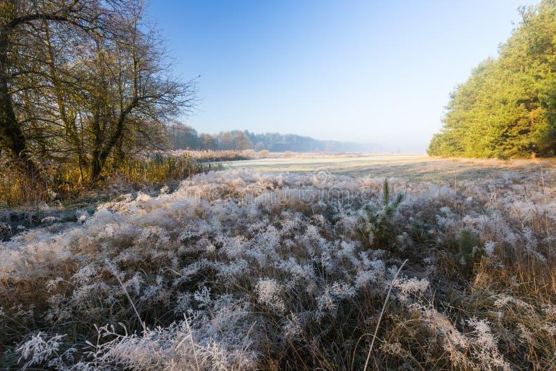 Beau matin avec le gel sur des usines Horizontal automnal photo stock