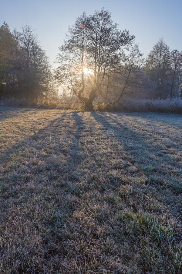 Beau matin avec le gel sur des usines Horizontal automnal image libre de droits