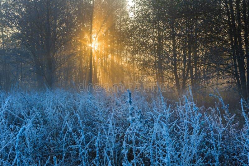 Beau matin avec le gel sur des usines Horizontal automnal photos stock