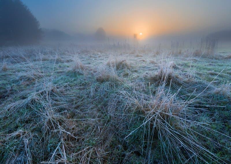 Beau matin avec le gel sur des usines Horizontal automnal image stock