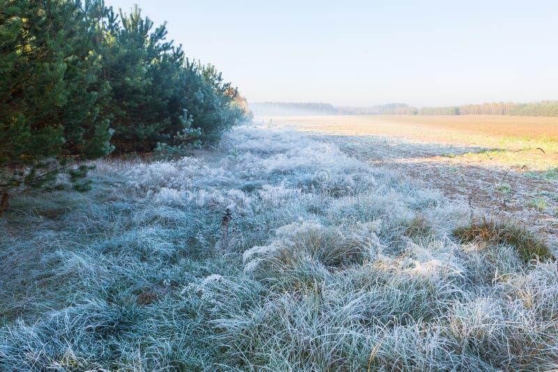 Beau matin avec le gel sur des usines Horizontal automnal photographie stock