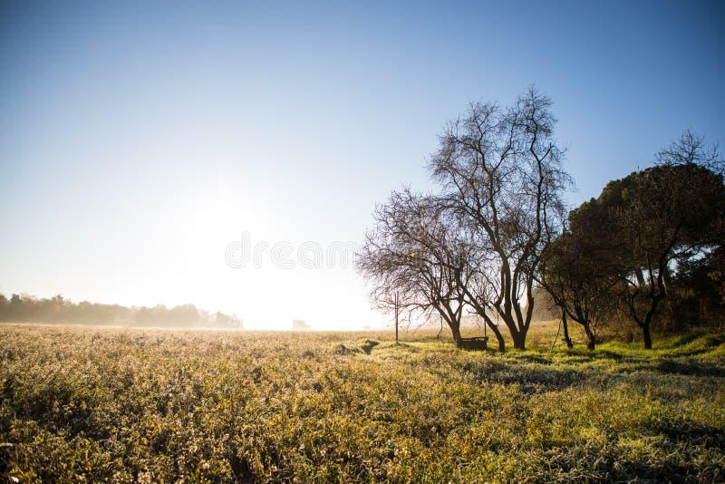 Beau matin ensoleillé au-dessus de champ en hiver avec le puits d'eau sous l'arbre sans feuilles photo libre de droits