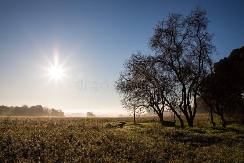 Beau matin ensoleillé au-dessus de champ en hiver avec le puits d'eau sous l'arbre sans feuilles images stock