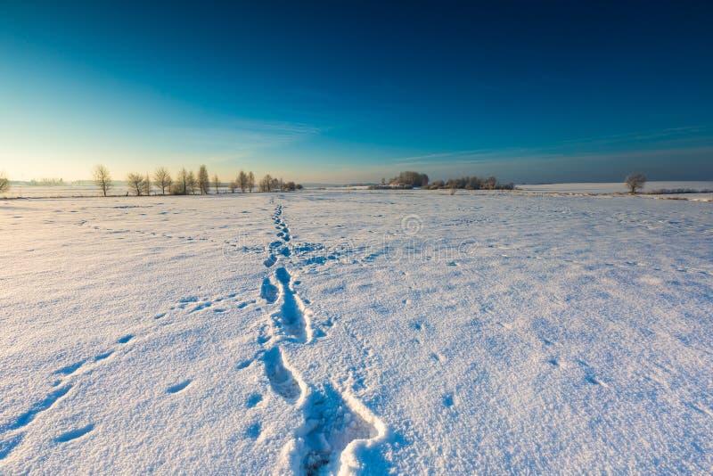 Beau matin froid sur la campagne neigeuse d'hiver photos stock