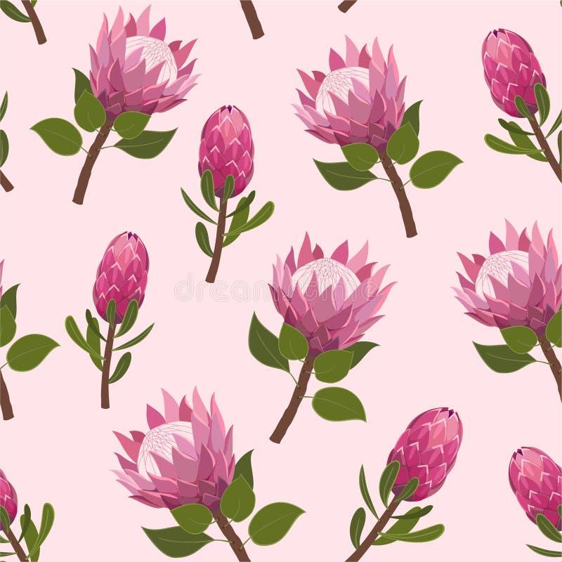 Beau modèle avec les fleurs exotiques de protea Texture sans couture de vecteur à la mode illustration libre de droits