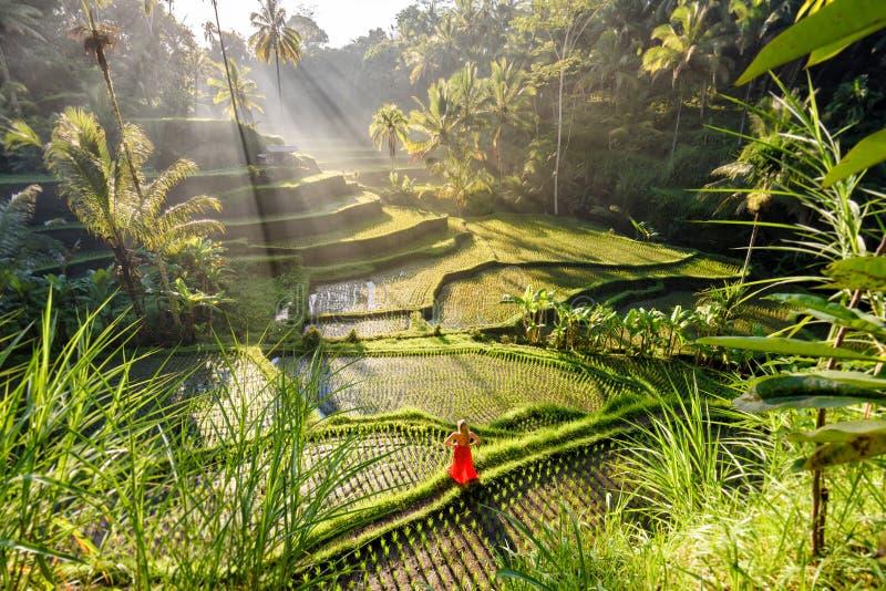 Beau modèle dans la robe rouge à la terrasse 7 de riz de Tegalalang images libres de droits