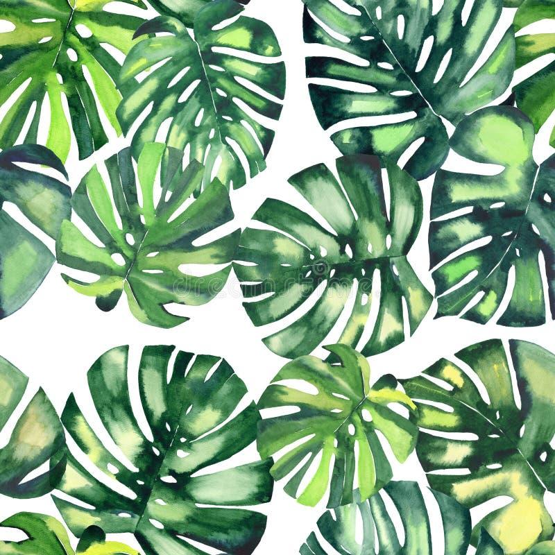 Beau modèle de fines herbes floral merveilleux tropical vert clair d'été d'Hawaï d'une main d'aquarelle de paumes de monstera illustration stock