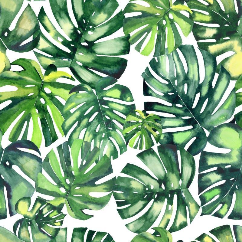 Beau modèle de fines herbes floral merveilleux tropical vert clair d'été d'Hawaï des paumes d'un monstera illustration stock