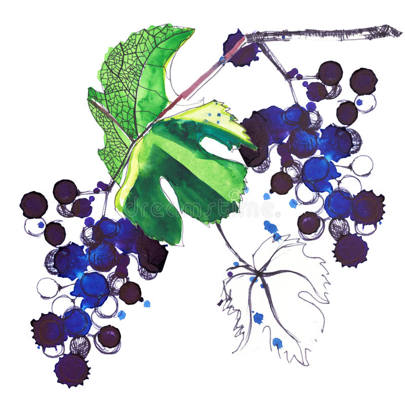 Beau modèle lumineux abstrait des raisins et des feuilles faits avec les aquarelles et le stylo illustration stock