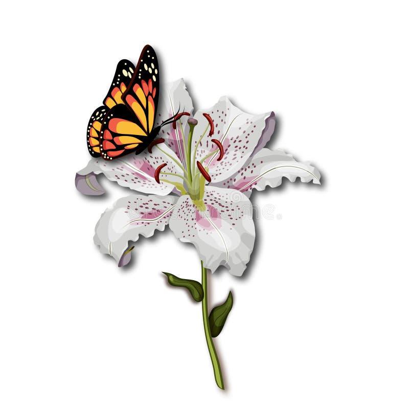 Beau monarque de papillon s'asseyant sur la fleur de lis blanc d'isolement sur le fond blanc illustration stock