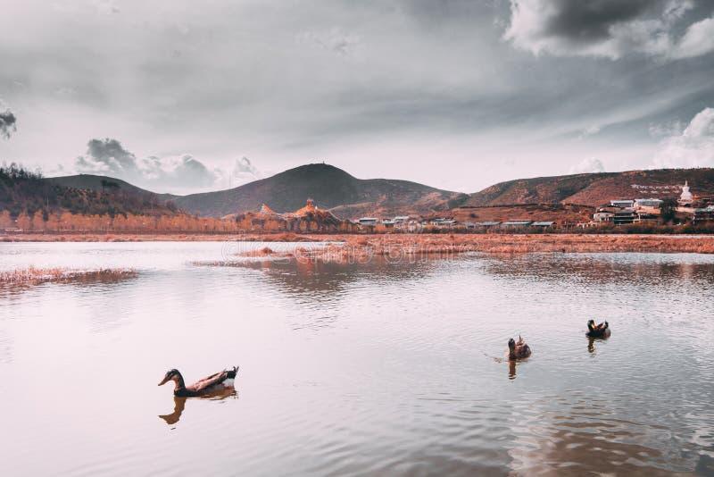 Beau monastère bouddhiste tibétain (temple de Songzanlin images libres de droits