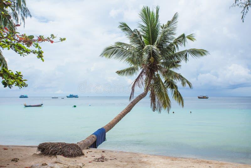Beau palmtree sur la plage photo libre de droits