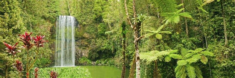 Beau panorama de cascade à écriture ligne par ligne de Millaa, Australie image stock