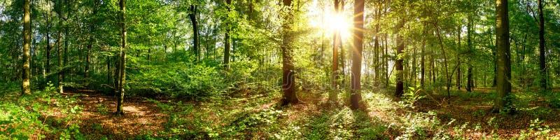 Beau panorama de forêt image stock