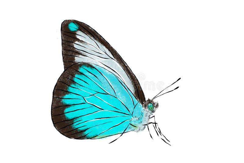 Beau papillon bleu d'isolement sur le fond blanc Illustration réaliste de dessin de main Collection d'insecte illustration libre de droits
