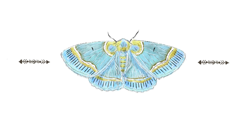 Beau papillon bleu réaliste tiré par la main d'isolement sur un fond blanc Collection d'insecte illustration de vecteur