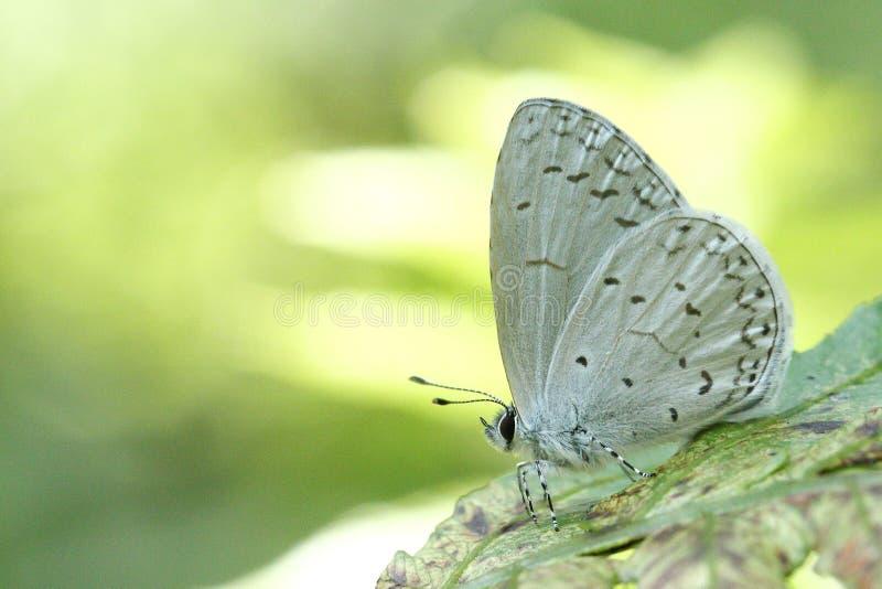 Beau papillon coloré en nature images stock