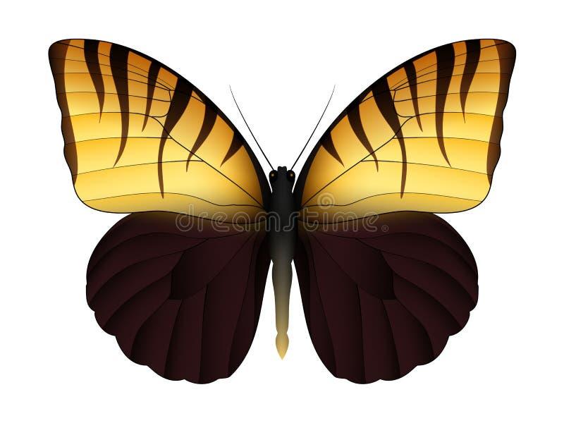 Beau papillon d'isolement sur un fond blanc illustration stock